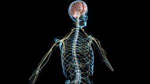 Peripheral Nerve Neuropathy